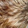 Materials: Fur