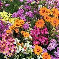 Plants: Annuals
