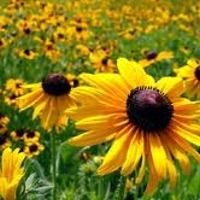 Plants: flowers