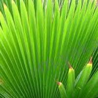 Plants: Plants