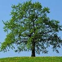 Plants: Tree